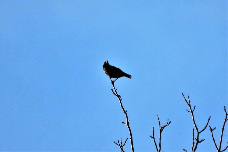 Oiseau mystère Img_2113