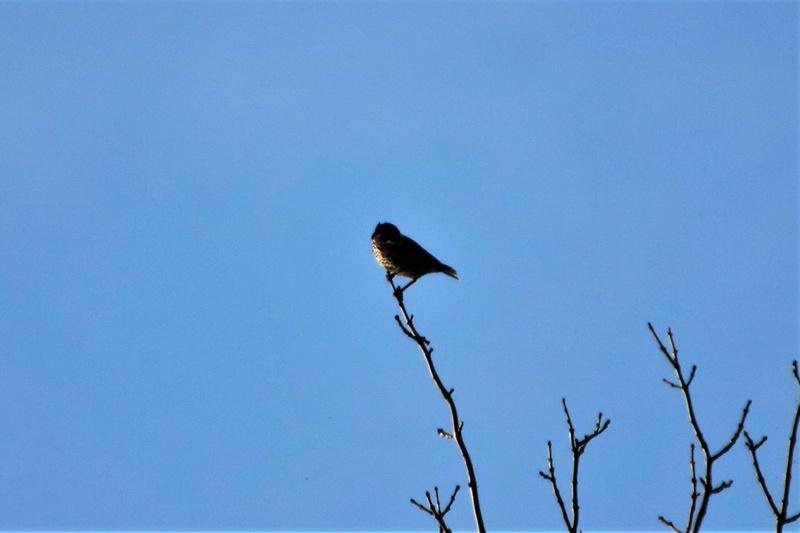 Oiseau mystère Img_2114