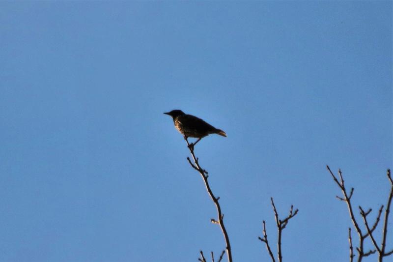 Oiseau mystère Img_2115