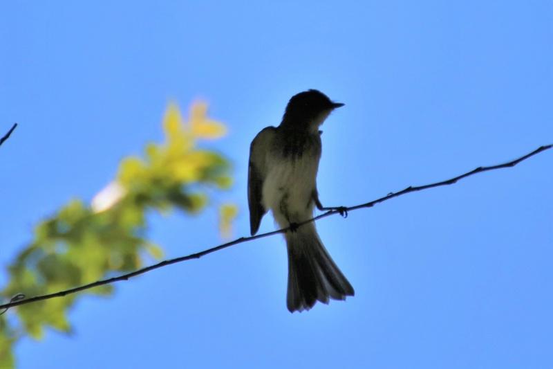 Quels sont ces oiseaux Img_6711