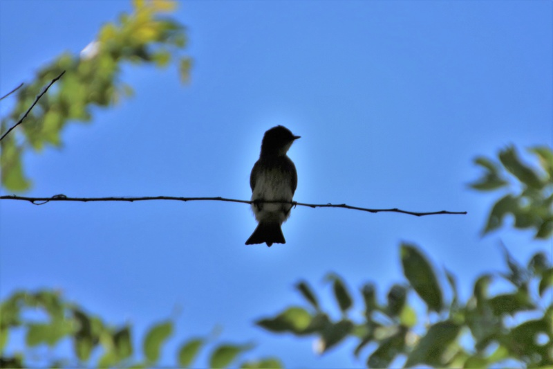Quels sont ces oiseaux Img_6712