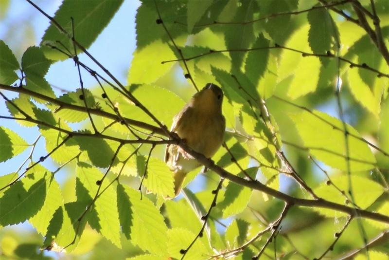 Quels sont ces oiseaux Img_6811