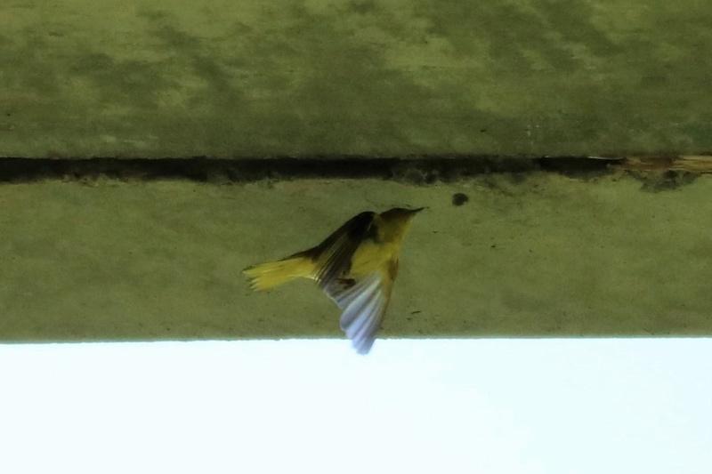 Quels sont ces oiseaux Img_6812