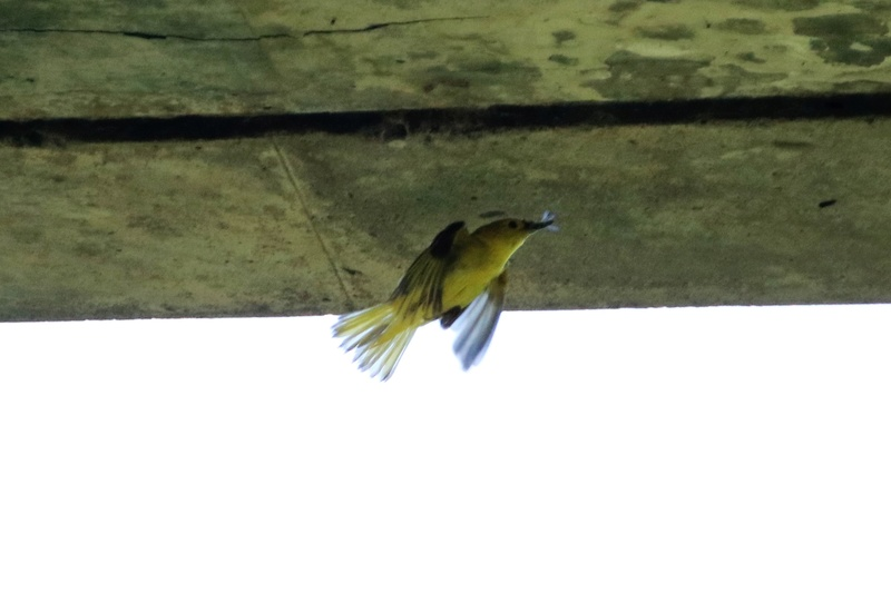 Quels sont ces oiseaux Img_6813