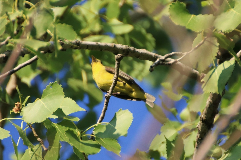 Quel est cet oiseau ? Img_8611