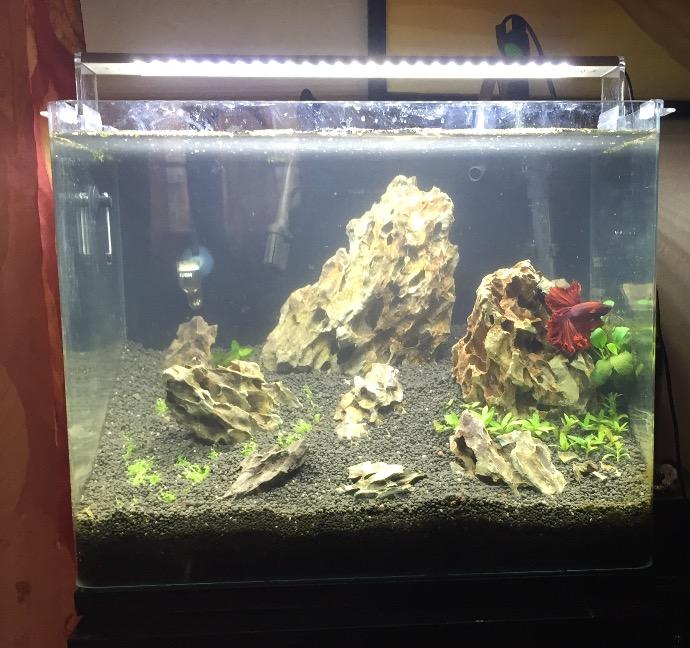 Bac 46 L Aquascaping Iwagumi Image13