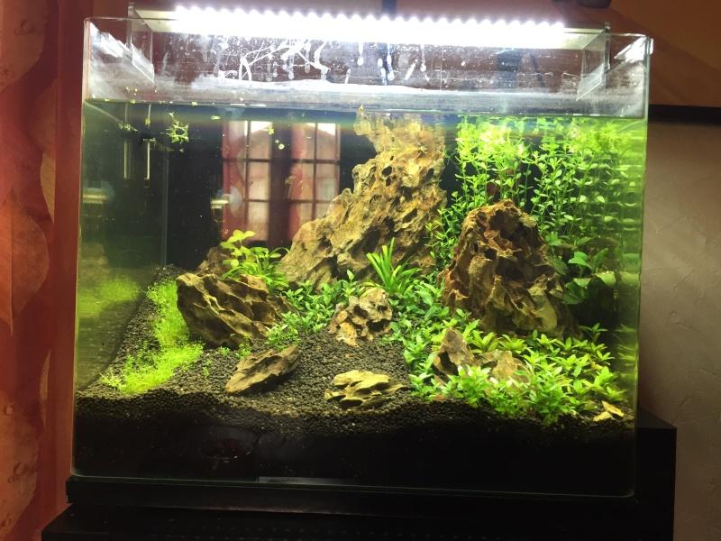 Bac 46 L Aquascaping Iwagumi Image15