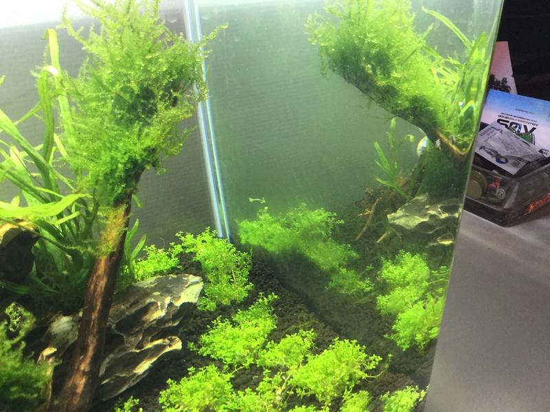 Devinez quoi?! Des algues! Img_0114