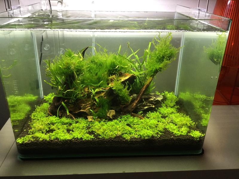 Devinez quoi?! Des algues! Img_0115