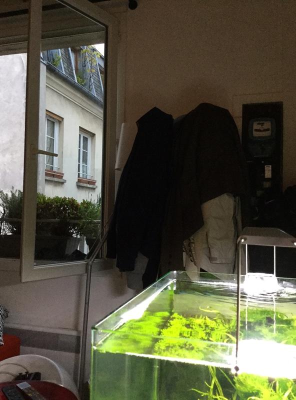 Devinez quoi?! Des algues! Img_0116