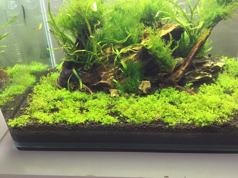 Devinez quoi?! Des algues! Img_0117