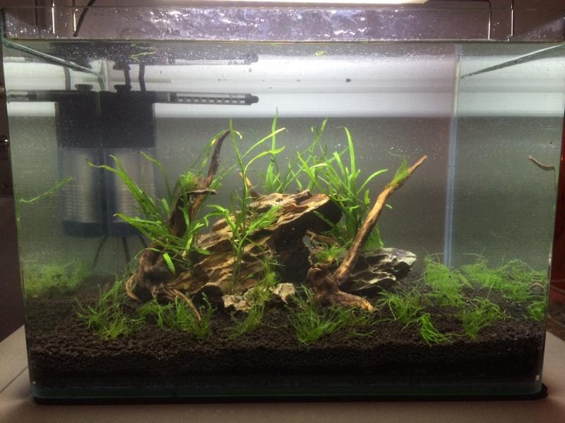 Mon premier vrai aquarium Img_4010
