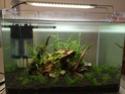 Mon premier vrai aquarium Img_4012