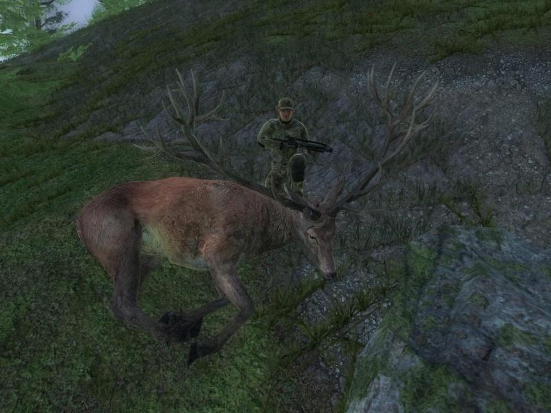 Cervo Rosso 279.413 Cervor10