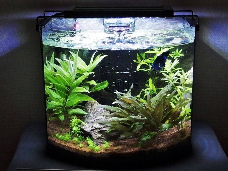 Betta Splendens - Bac 30 litres - Page 2 P8160010