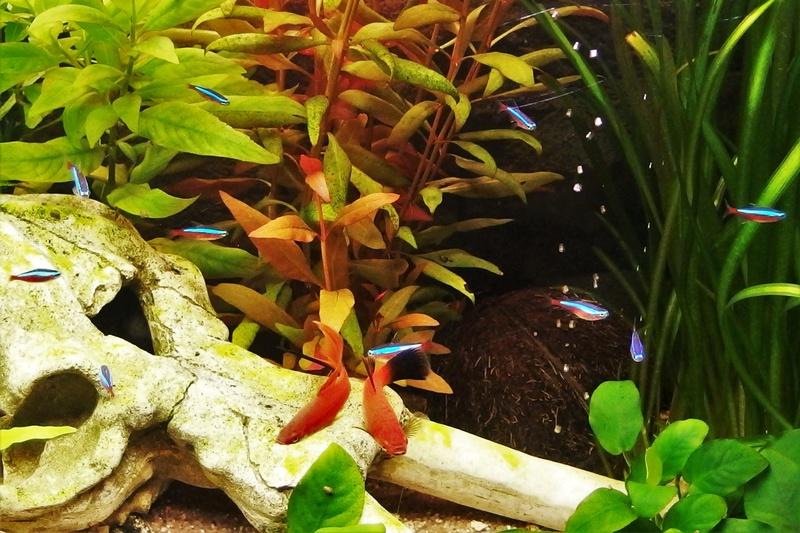 120 L - Tendance Amérique du Sud [help]Problème d'algues P8160019