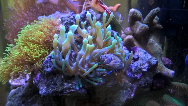 nano recif 30 litres Wp_20129