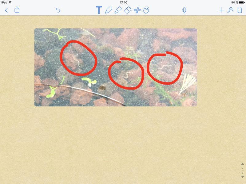 Hecatombe crevettes et vers blanc dans bac.?  Image17