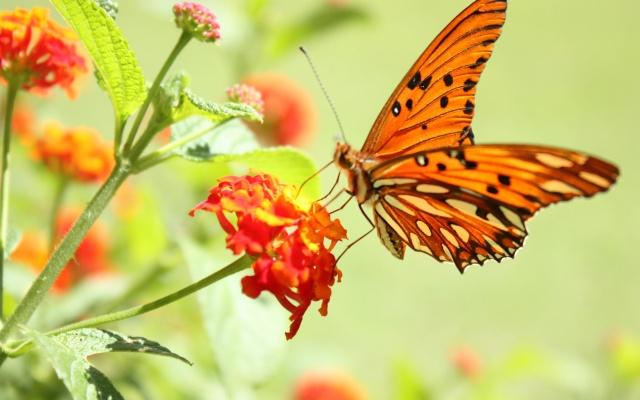 Nos amis les papillons (symbolique) - Page 2 Goodwp11