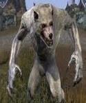 Loups-garous et loups  Loup-g14