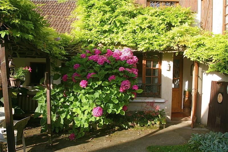 mon jardin à Avernes. Img_0012