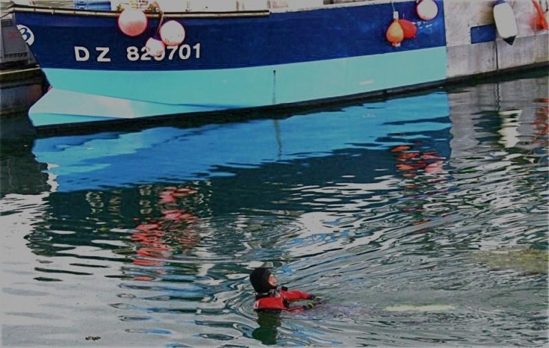 Un drôle de dauphin dans le port de Douarnenez Thumb_15