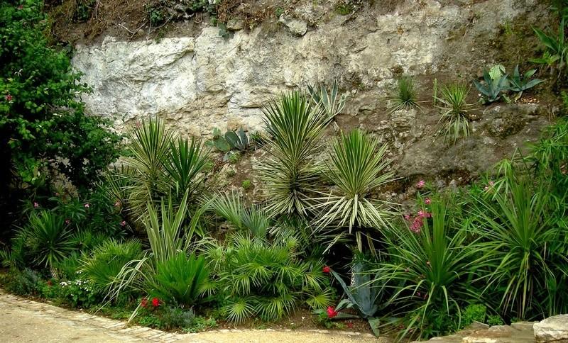(24) Petit jardin exotique à la Roque-Gageac Dscn2412