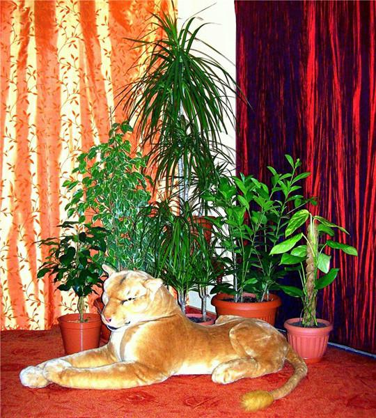 коты и цветы 10209610