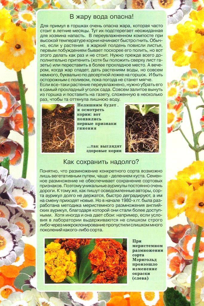 статьи о растениях из  газет и журналов - Страница 2 1410