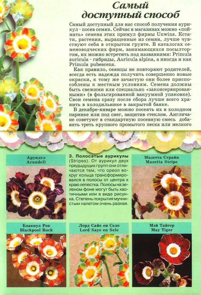 статьи о растениях из  газет и журналов - Страница 2 1510