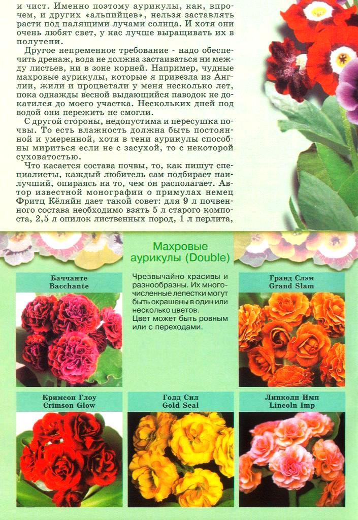 статьи о растениях из  газет и журналов - Страница 2 1910