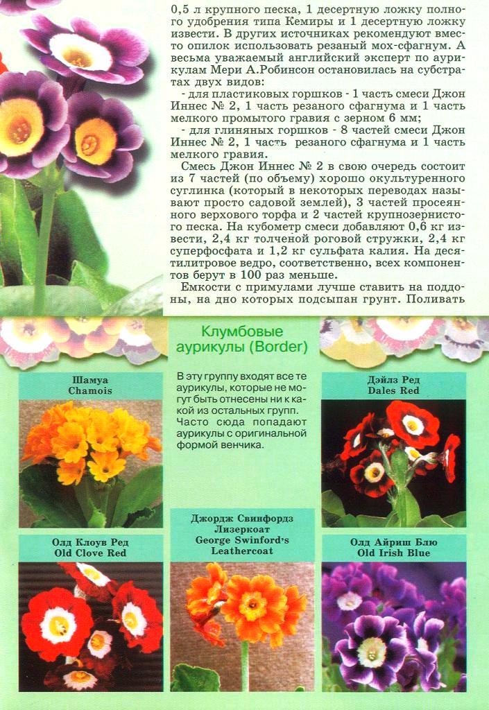 статьи о растениях из  газет и журналов - Страница 2 2010