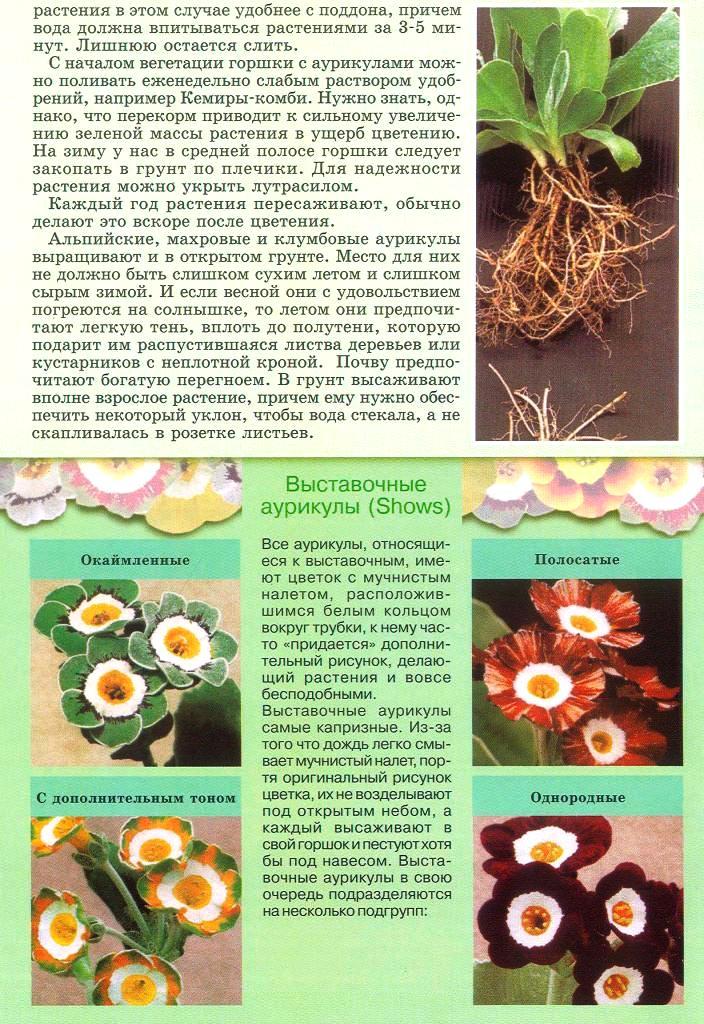 статьи о растениях из  газет и журналов - Страница 2 2110