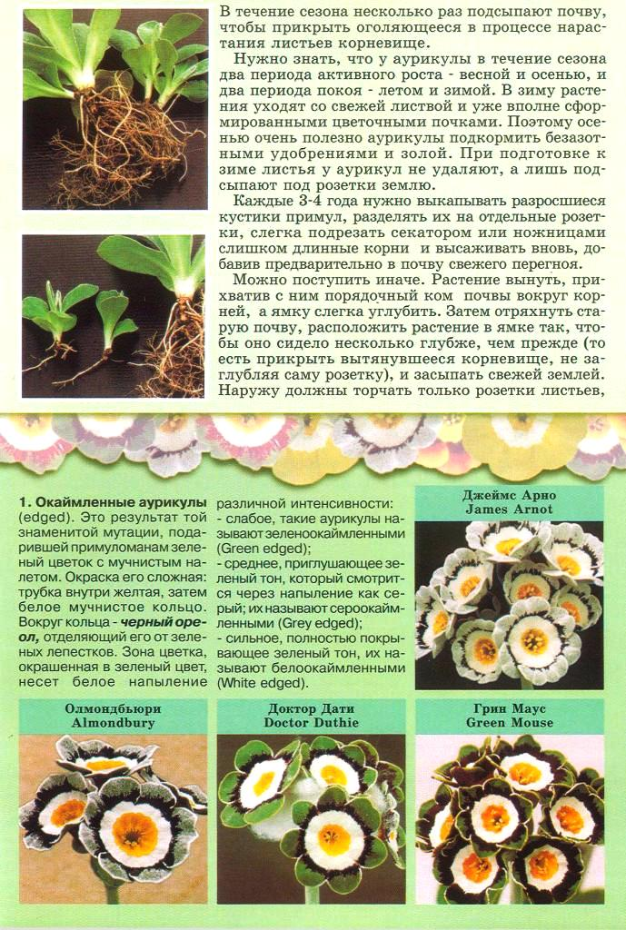 статьи о растениях из  газет и журналов - Страница 2 2210