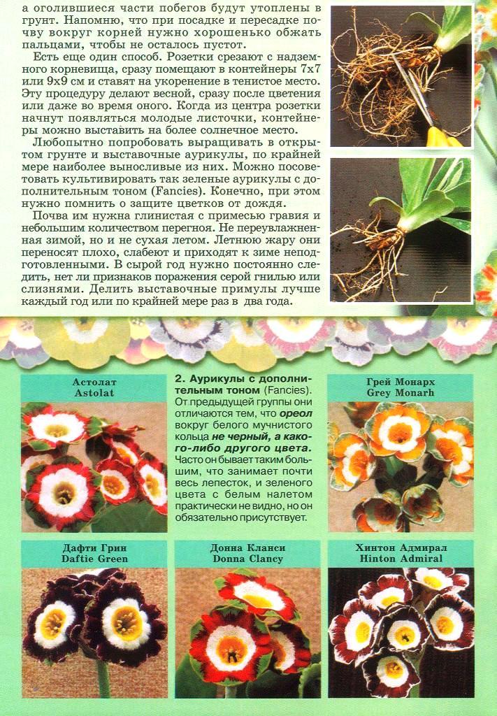 статьи о растениях из  газет и журналов - Страница 2 2310