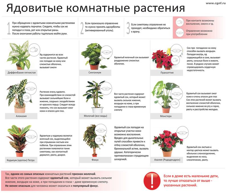 статьи о растениях из  газет и журналов Cveti10