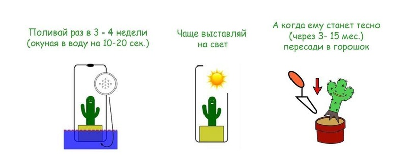 "Живой брелок ""Миникактус"" или pet plant ,Pet Tree Minika10"