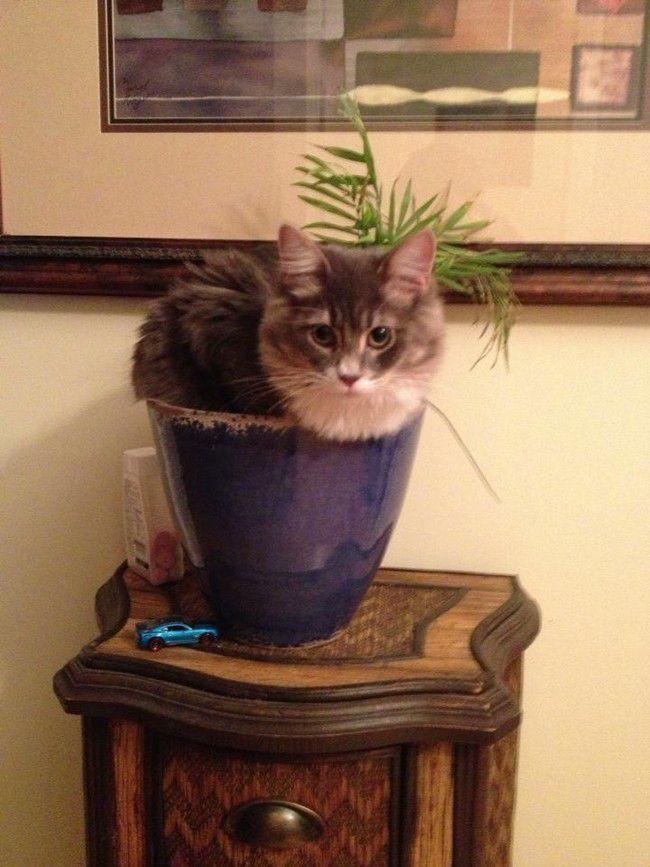 коты и цветы Origin10