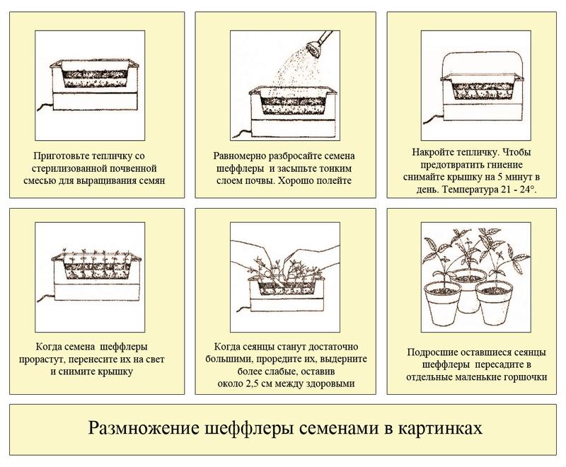 статьи о растениях из  газет и журналов - Страница 2 Razmno11