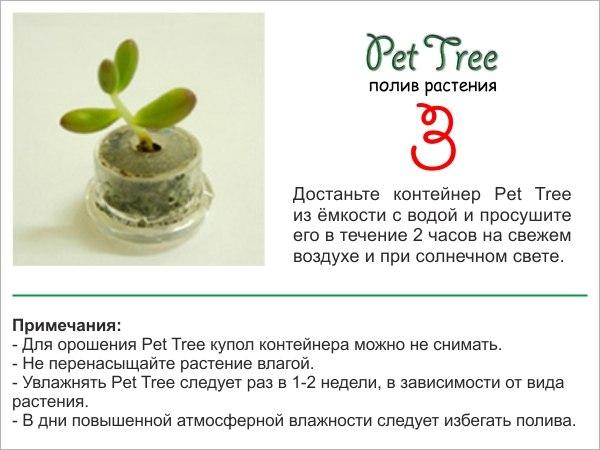 """Живой брелок """"Миникактус"""" или pet plant ,Pet Tree X_21e910"""