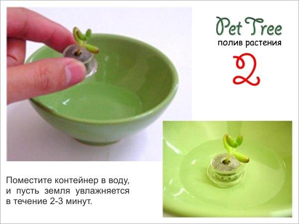 "Живой брелок ""Миникактус"" или pet plant ,Pet Tree X_681b10"