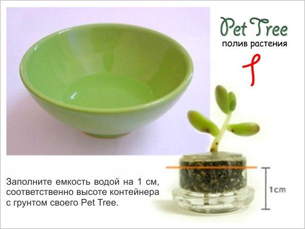 "Живой брелок ""Миникактус"" или pet plant ,Pet Tree X_f50a10"