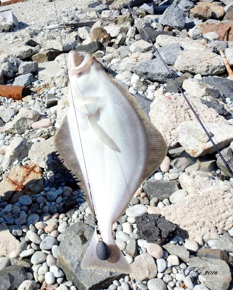 Sole/poisson  En attendant le traversier a Godbout  Dscn8611