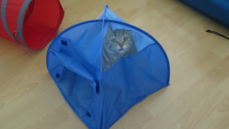 Première vraie sortie 9 jours avec Sharly, la chatte voyageuse Img_7216