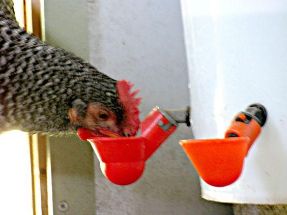 Abreuvoirs pour poules 786d3810