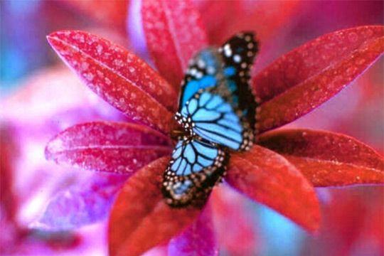 Nos amis les papillons (symbolique) - Page 2 50406910