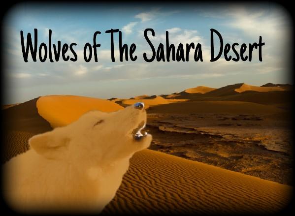 Wolves of The Sahara Desert Image10