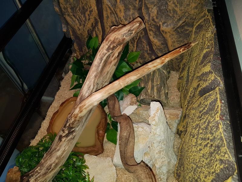 Terrarium pour pantherophis guttatus juvénile - Page 5 20160610