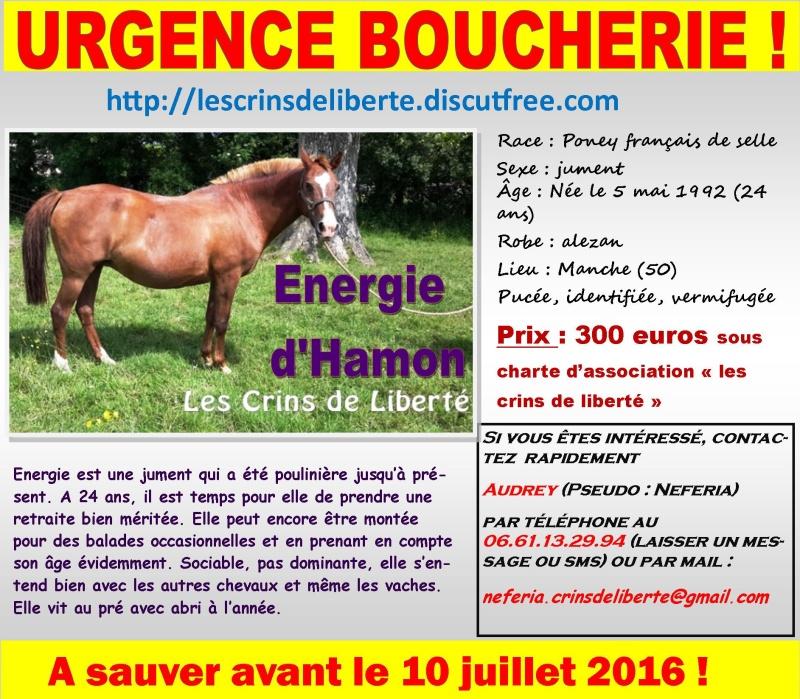 Dpt 50 - 24 ans, Énergie d'Hamon, PFS, Sauvée par Claire R. ! eutanasié - Page 3 Urgene10