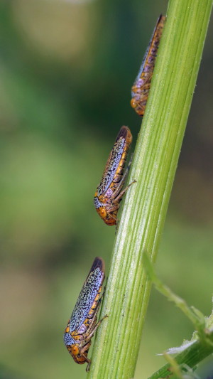 Helpful Beetles Img_3410